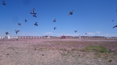 Pigeons flying around Shambala